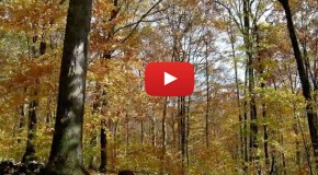 Video: Spend a Year in the Forest in Three Minutes