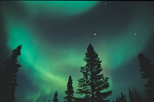 Treetops and northern lights