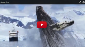 Video of the Week: Tremendous Number of Whales in Antarctica!