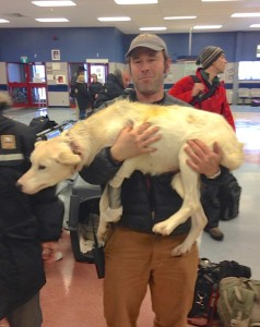 Brad Josephs carries Ursula in the Churchill airport, ready to transport her by plane to Winnipeg.
