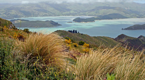 Traveling in New Zealand: Separated by the Same Language