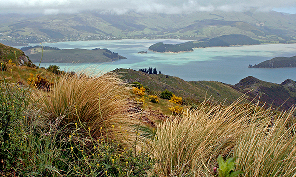 On New Zealand's South Island, rugged coastlines meet peaceful sounds and rainforests run out to active glaciers and icy fjords. ©Candice Gaukel Andrews