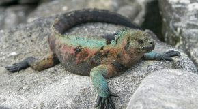 Five Astounding Animal Adaptations in the Galapagos Islands