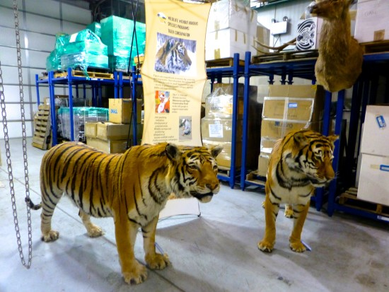 Inside the U.S. National Wildlife Property Repository. Photo: Wendy Worrall Redal