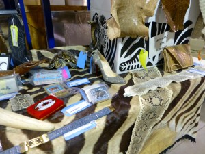 Confiscated items made from illegal wild animal parts. Many tourists and consumers do not realize their purchases support wildlife trafficking. Photo credit: Wendy Worrall Redal