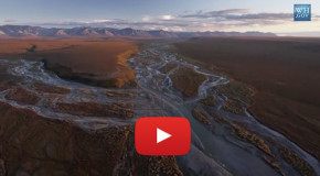 Video: The Importance of the Arctic National Wildlife Refuge