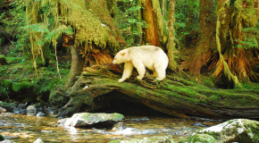 Finding Magic in the Great Bear Rainforest – A Photo Journal