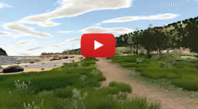 Video: Take a Virtual Nature Walk