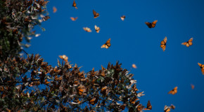 On Monarchs and Magic: Visiting the Butterfly Sanctuaries of Mexico