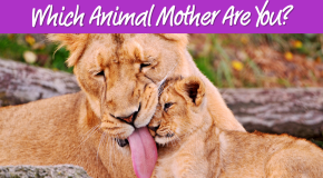 Mother's Day Quiz: Which Animal Mother Are You?