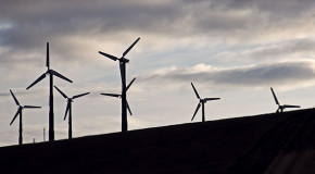 Wind Power: Must the Choice Be Clean Energy or Wildlife?