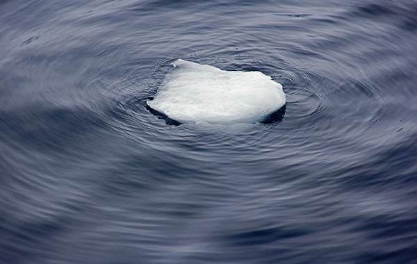 Given our planet's current rapid climate change, our grandchildren may never see a real iceberg. ©Candice Gaukel Andrews