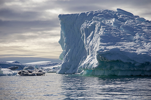 Massive icebergs calving off Greenland's ice sheet are causing glacial earthquakes. ©Candice Gaukel Andrews