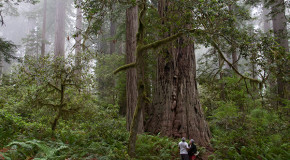 Photo Journal: the Tall Trees of Redwood National Park