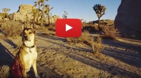 Video: Denali, the Adventure Dog