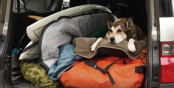 """Sometimes, our four-footed best friends remind us that life is about adventures. ©From the video """"Denali,"""" Moonhouse, 2015"""