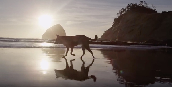 """Denali walks on a beach during his last road trip. ©From the video """"Denali,"""" Moonhouse, 2015"""