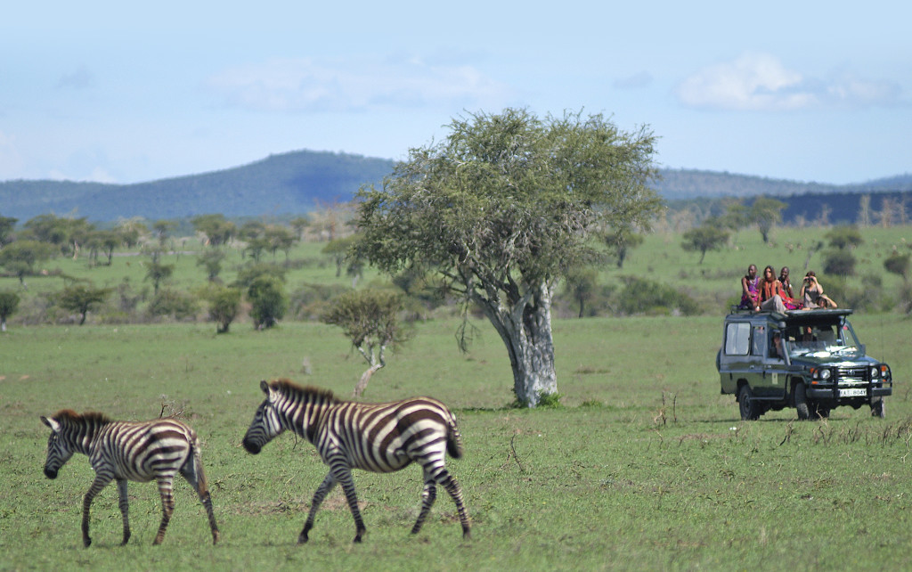 Safari guests view zebras in Kenya's Mara Siana Conservancy