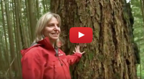 Video: Trees Have Their Own Internet, and It Works Like Ours