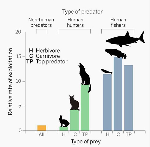 "The rate at which humans exploit land mammals and marine fish vastly exceeds the impacts of other predators (H=herbivore; C=carnivores; TP= top predators). ©P. Huey/""Science"""