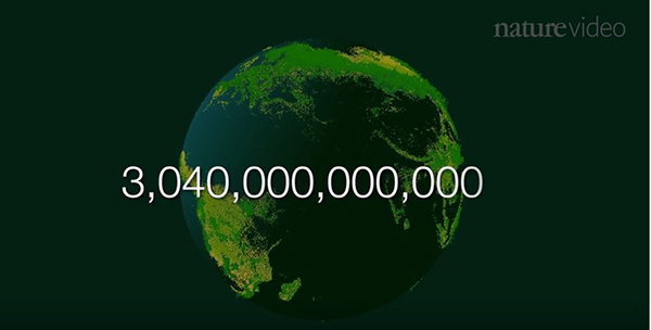 "The answer to the question of how many trees there are on Earth required 421,529 measurements from 50 countries on six continents. ©From the video ""‪How many trees are there in the world?,"" naturevideo, 2015‬‬‬‬‬‬"