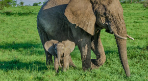 Wildlife Photo of the Week: Mom & Baby Elephant