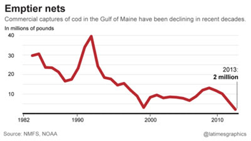 The Gulf of Maine commercial cod catch has steadily declined since the 1990s. ©National Marine Fisheries Service, NOAA