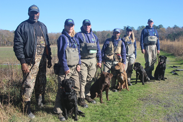 Dogs are helping many agencies in their conservation efforts. On the Delmarva Peninsula in Delaware, a U.S. Department of Agriculture team of handlers and their detector dogs are working on a program to eradicate nutria, an invasive rodent. ©USDA