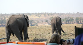 Two Unexpected Wildlife Encounters in Botswana