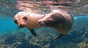 Galapagos—A Natural History Classroom for All Ages | Olaf's Corner