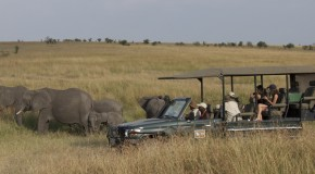 WWF Kenya Safari Sweepstakes—Announcing the Adventure and the Winners
