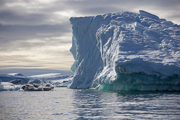 Glaciers give birth to icebergs; and in Greenland, some glaciers are rapidly melting and calving high volumes of icebergs into the ocean. ©Candice Gaukel Andrews
