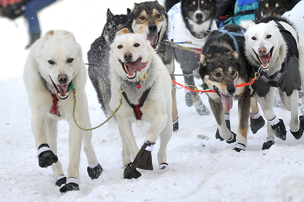 """The modern Iditarod Trail Sled Dog Race commemorates the """"Great Race of Mercy,"""" the trail itself and the sled-dog culture. ©John Pennell/JBER PA), flickr"""