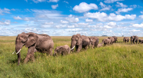 Wildlife Photo of the Week: Elephants on Parade