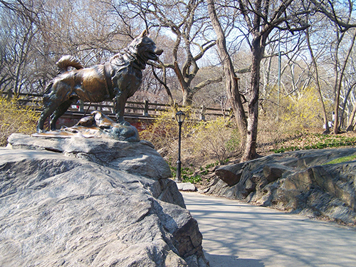 A statue of Balto, the Alaska sled dog that led the team on the last leg of the diphtheria serum to Nome in 1925, stands in New York's Central Park. ©rawr_one, flickr