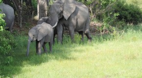 "Consider ""Going Green"" – Travel During Botswana's Rainy Season"