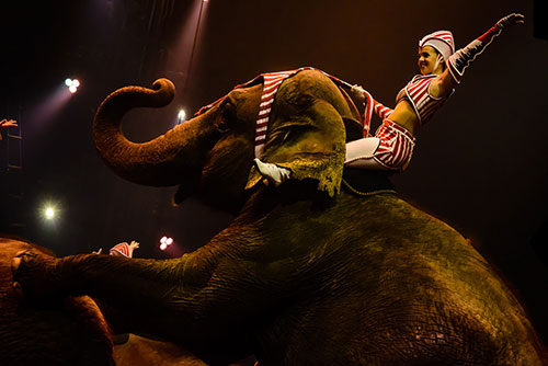 A recent poll revealed that the majority of Americans are worried about the welfare of circus animals. ©Christiane Birr, flickr