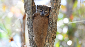 Rare Sights in Madagascar