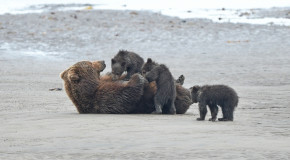 Wildlife Photo of the Week: Lunch on the Beach