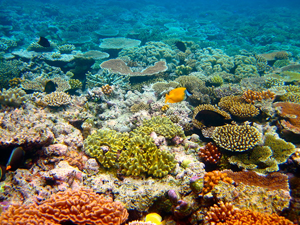 In a new UNESCO report on climate change, mention of the Great Barrier Reef is strangely absent, despite its being a poster child for a rapidly warming planet. ©Kyle Taylor, flickr