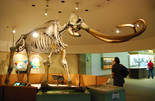 Woolly mammoths became extinct at least 3,600 years ago. ©Long Zheng, flickr