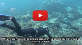 Video: Imperiled Corals of Australia's Great Barrier Reef