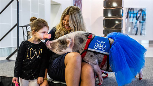 LiLou and her human companion, Tatyana Danilova, bring smiles to those at San Francisco International Airport. ©San Francisco International Airport/Facebook