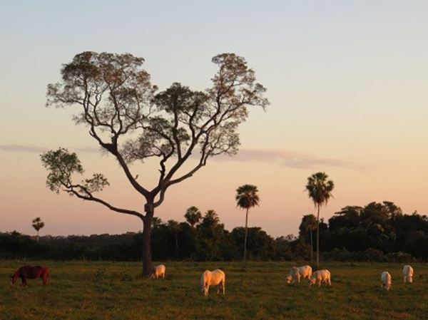 Sunset on the Estancia in Brazil's Pantanal