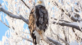 Wildlife Photo of the Week: Crystallized Eagle