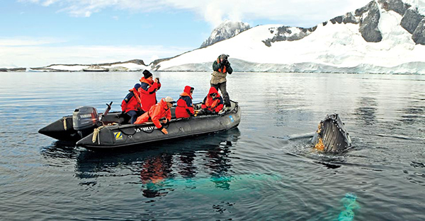See Whales in Antarctica