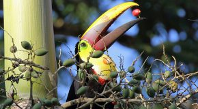 Off the Beaten Track: Exploring Corcovado National Park