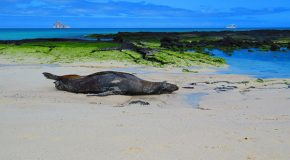 Being Present and Finding Peace in the Galapagos Islands