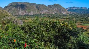 Savoring Cuban Cigars in Viñales National Park, Cuba