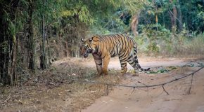 Traveler Story: Our Grand India Wildlife Adventure